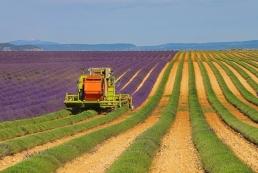 Tratamente pentru agricultura si viticultura