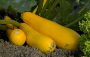 Organic plus™ - Biostimulant vegetal si biofungicid